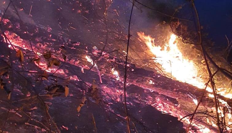 Meşeiçinde Yangın Çıktı