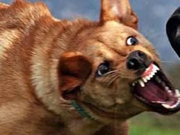 Köpek Saldırısına Karşı Nasıl Hareket Etmeli !
