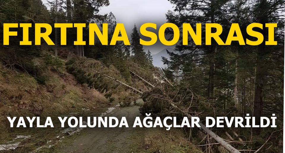 Yukarıköy'de Fırtına Çıktı Ağaçlar Devrildi (FOTO)